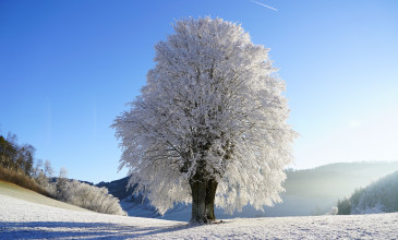 boom in winterlandschap